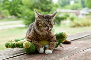 I should be writing, not searching for pics of Lil Bub.